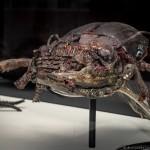 CronenbergEvolutionTIff-AlejandroSantiago-5009